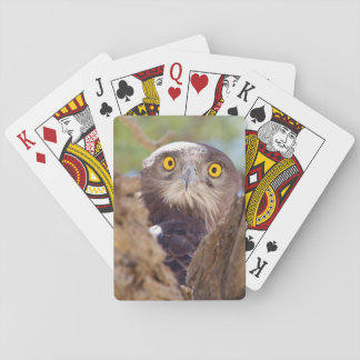 A White-breasted Snake Eagle Playing Cards