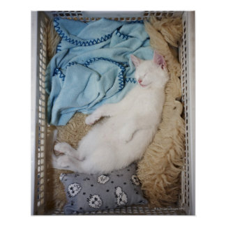 A white cat sleeping in a laundry basket, print