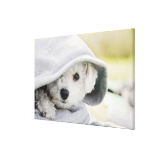 a white dog wearing a hood of shirt canvas print