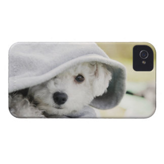 a white dog wearing a hood of shirt iPhone 4 Case-Mate cases