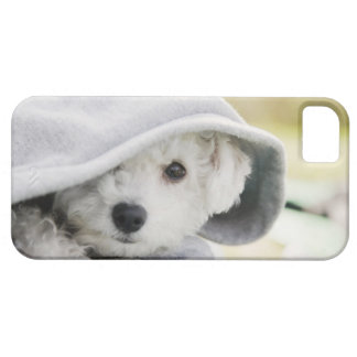 a white dog wearing a hood of shirt iPhone 5 case