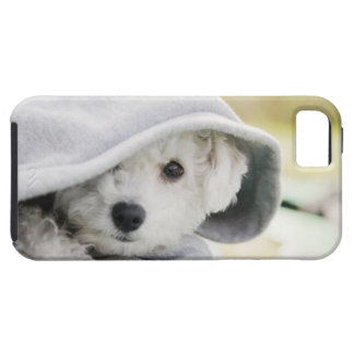 a white dog wearing a hood of shirt iPhone 5 covers