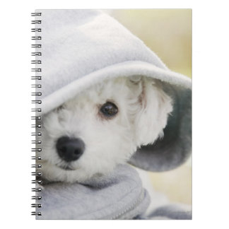 a white dog wearing a hood of shirt notebooks
