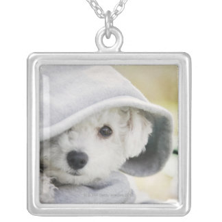 a white dog wearing a hood of shirt square pendant necklace