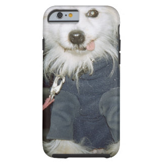 A white dog wearing clothes. tough iPhone 6 case