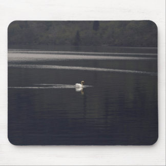 A white goose swimming peacefully in morning mousepad
