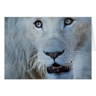 A white lion in Africa Greeting Card