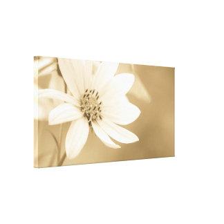 A white sunflower canvas print