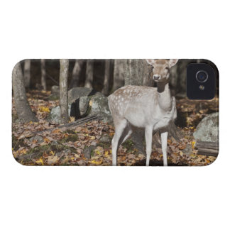 A White-tailed deer (fawn) standing in the iPhone 4 Case-Mate Cases