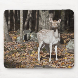 A White-tailed deer (fawn) standing in the Mouse Pad