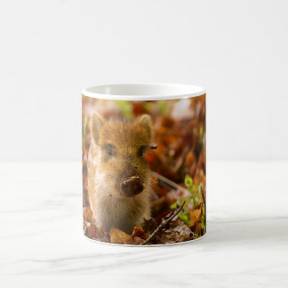 A Wild Boar Piglet Sus Scrofa in the Autumn Leaves Basic White Mug
