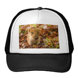 A Wild Boar Piglet Sus Scrofa in the Autumn Leaves Hat