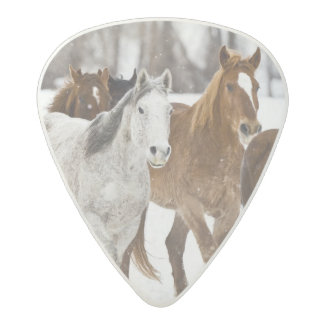 A winter scenic of running horses on The 2 Acetal Guitar Pick