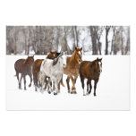 A winter scenic of running horses on The 2 Photo Print