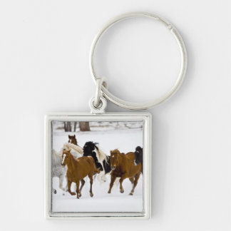 A winter scenic of running horses on The Key Ring