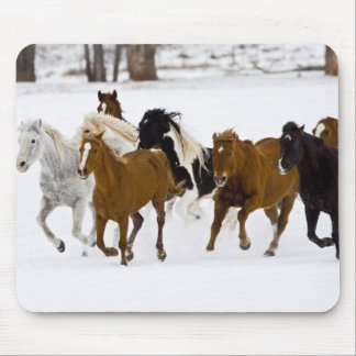 A winter scenic of running horses on The Mouse Mat