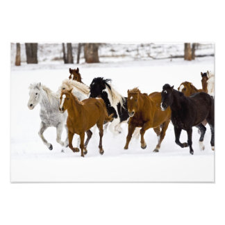A winter scenic of running horses on The Photo Art