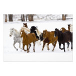 A winter scenic of running horses on The Photographic Print