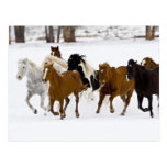 A winter scenic of running horses on The Post Card