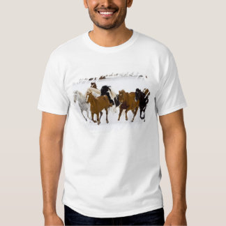 A winter scenic of running horses on The Shirt