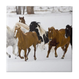 A winter scenic of running horses tile