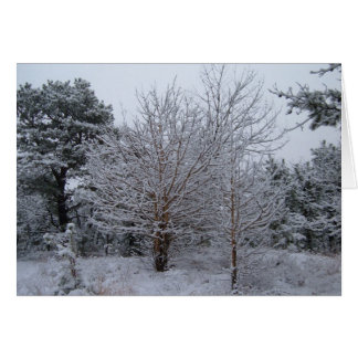 A Winter Wonderland of Snow Covered Trees Greeting Cards