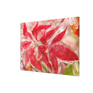 A winters ice storm covering the leaves of gallery wrapped canvas