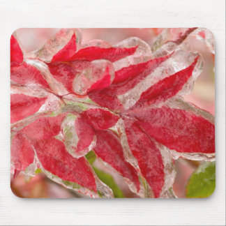 A winters ice storm covering the leaves of mouse pad