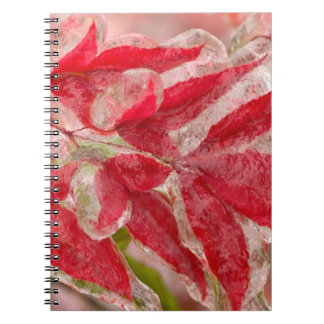 A winters ice storm covering the leaves of notebook