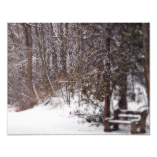 A Winter's Trail Photo Print