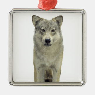 A wolf christmas ornament