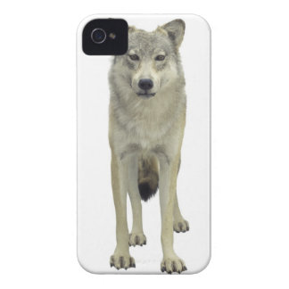 A wolf iPhone 4 Case-Mate case