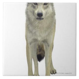 A wolf tile