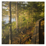 A wooden walkway in Acadia National Park Maine Large Square Tile