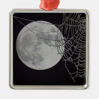 A world Wide Web Ornaments