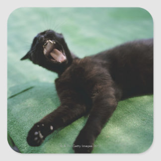 A yawning cat. square sticker