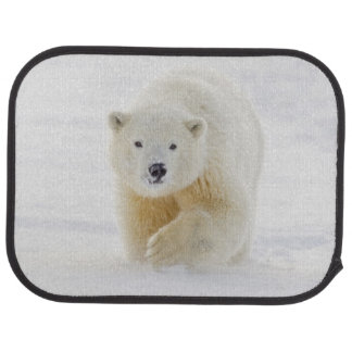 A yearling polar bear cub plays in the snow floor mat