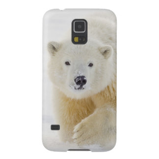 A yearling polar bear cub plays in the snow galaxy s5 cover