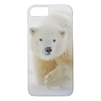A yearling polar bear cub plays in the snow iPhone 8/7 case