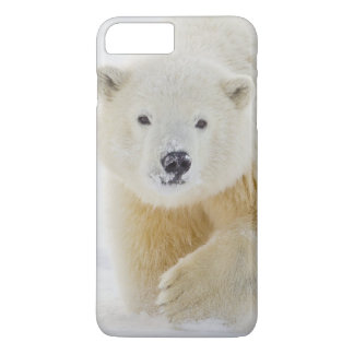 A yearling polar bear cub plays in the snow iPhone 8 plus/7 plus case