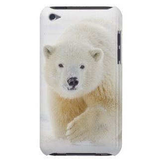 A yearling polar bear cub plays in the snow iPod touch Case-Mate case