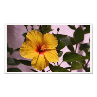 A Yellow Hibiscus in the sun Photo Print