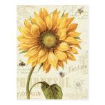 A Yellow Sunflower Postcard