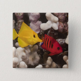 A Yellow Tang 15 Cm Square Badge