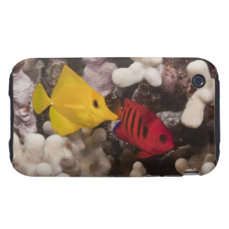A Yellow Tang iPhone 3 Tough Cover