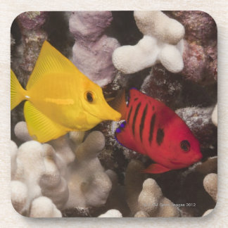 A Yellow Tang Drink Coaster