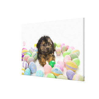A Yorkie-poo puppy and Easter eggs. Gallery Wrapped Canvas