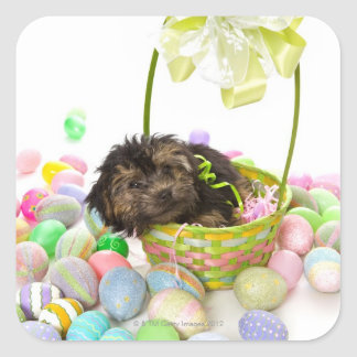 A Yorkie-poo puppy encountering an Easter basket Square Sticker