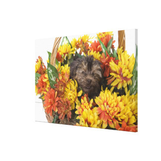 A Yorkie-Poo puppy in a basket of artificial Canvas Prints