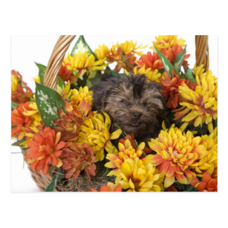 A Yorkie-Poo puppy in a basket of artificial Postcard